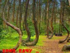Кривой лес Западной Польши и лес Хойя-Бачу — Бермудский треугольник Трансильвании.