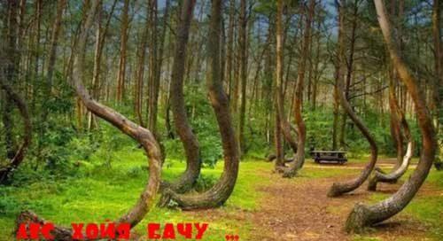 Заколдованный лес Хойя-Бачу - Бермудский треугольник Трансильвании