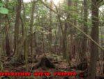 Лес самоубийц, проклятая область Японии.