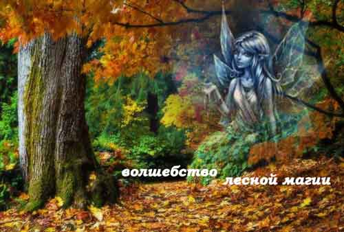 Лесная магия, волшебная энергия леса
