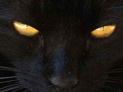 Черная кошка, суеверие и верование неудачи — удачи.