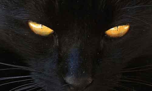 Черная кошка, суеверие и опасение неприятных встреч