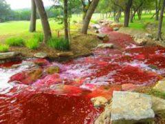 Воды мира превращаются в кровь, как сказано в библейских пророчествах о конце света.