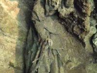 Статуя матушки Шиптон в ее пещере