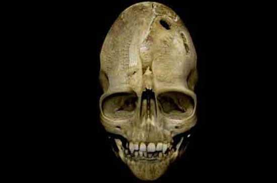 Клыкастый и удлиненный череп из Андовера