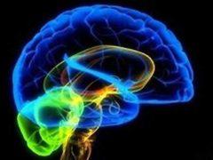 Искусственный мозг можно будет создать к 2030 году.